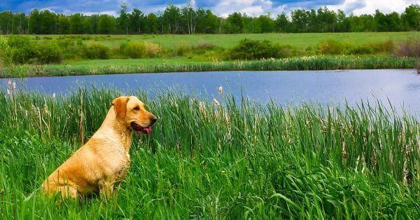 onlasting van je hond vertelt een hoop