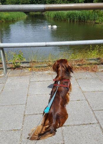 pup socialiseren met andere honden