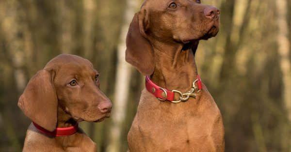 De verschillende vachtkleuren bij honden