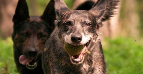 Hondengedrag en het belang van goede omgangsvormen