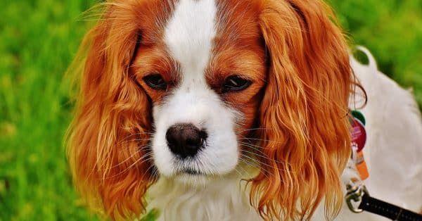 Top 5 aandachtspunten bij het kopen van een hond
