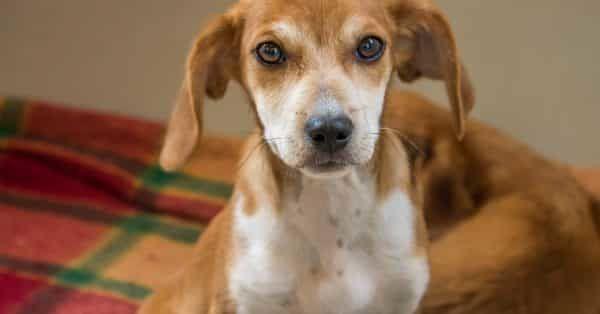aandachtspunten bij adopteren van honden