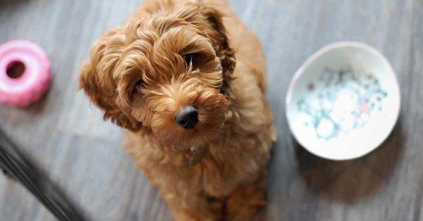 de ultime lijst met 125 dingen wat je hond wel en niet mag eten