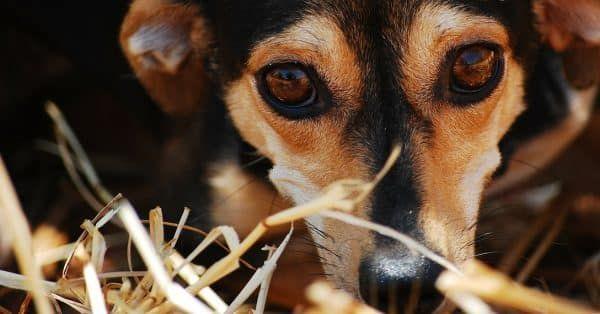 heeft je hond de hik