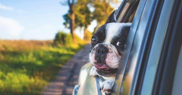 hond in auto hitte dodelijk