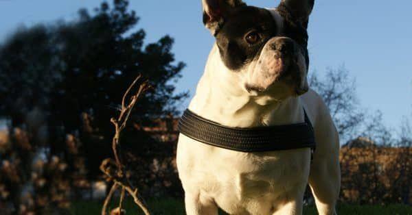wat kost verzorging hond