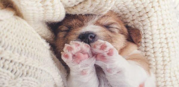 beste-puppy-verzekering