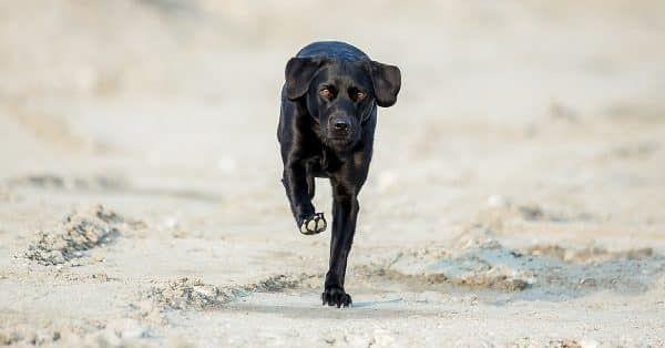 een kijkje bij de hondenfokker