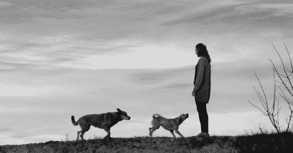 hond trainen