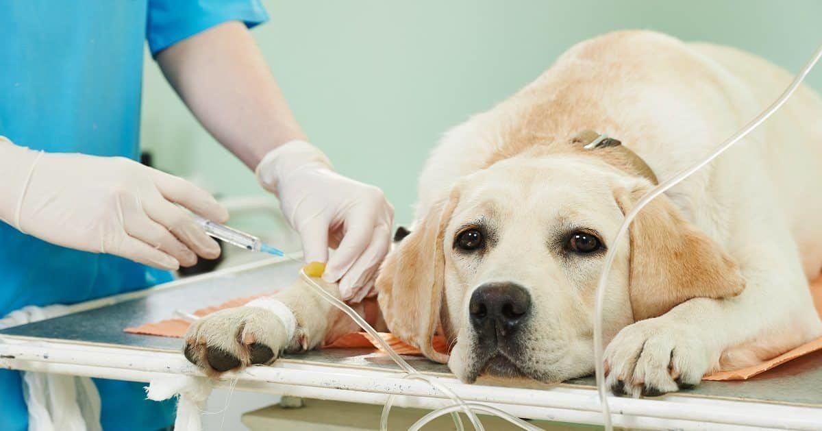 hondenverzekering wel of niet