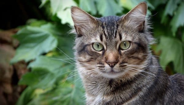kattenverzekering