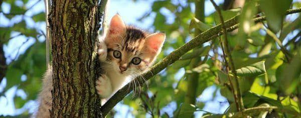 kitten ontwormen