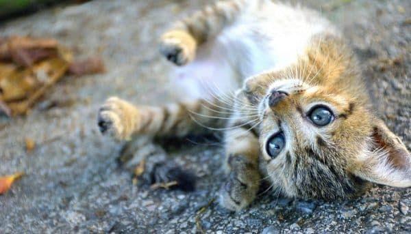 kitten-verzekeren