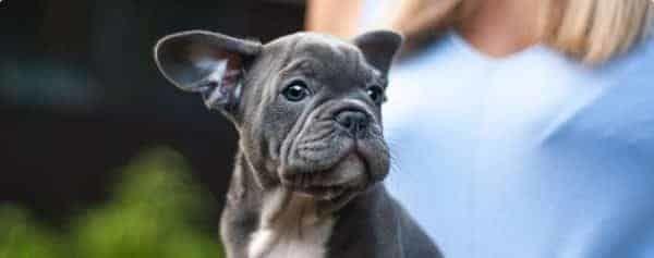 kosten gebitsbehandeling hond