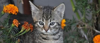 leeftijd-kat-verzekering