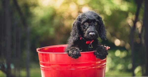 puppy-verzekering