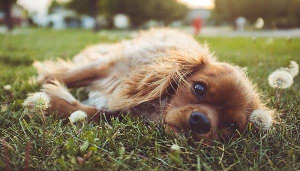 ziektekostenverzekering voor honden
