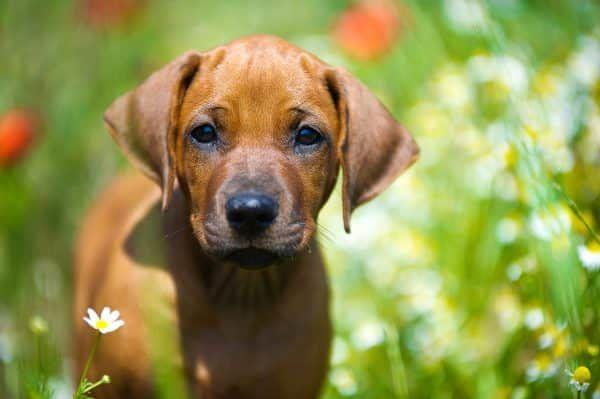 ziektekostenverzekering-voor-honden