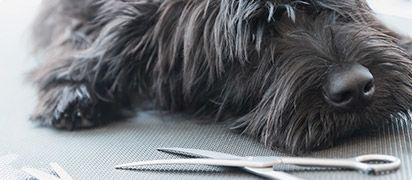 zorgverzekering hond vergelijken-aanvullend