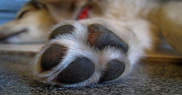 accessoires honden