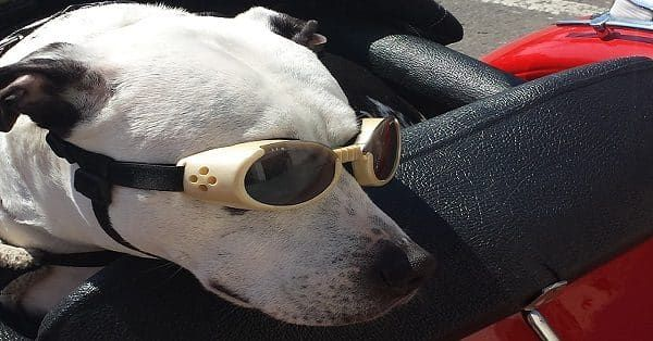 accessoires voor honden