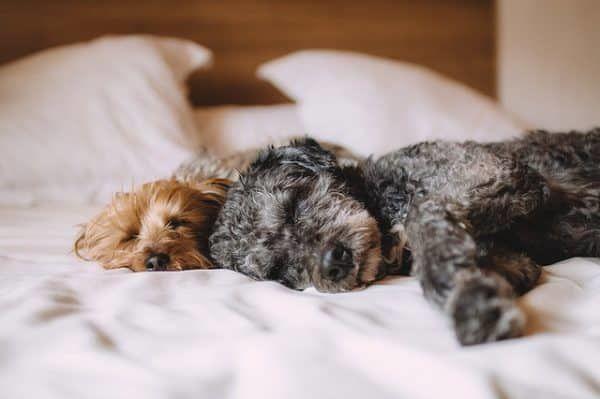 Op zoek naar een hondenkussen tips om het beste hondenkussen