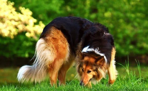 hondendekens