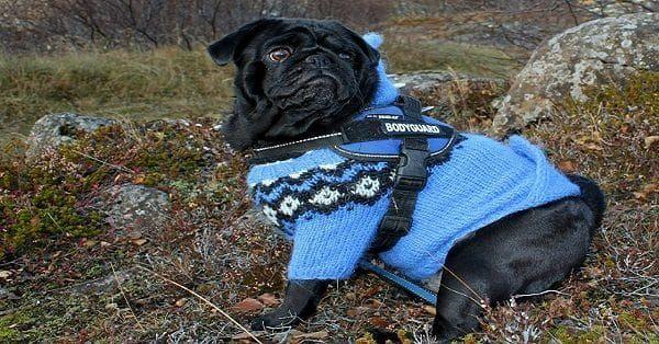 goedkope hondenkleding
