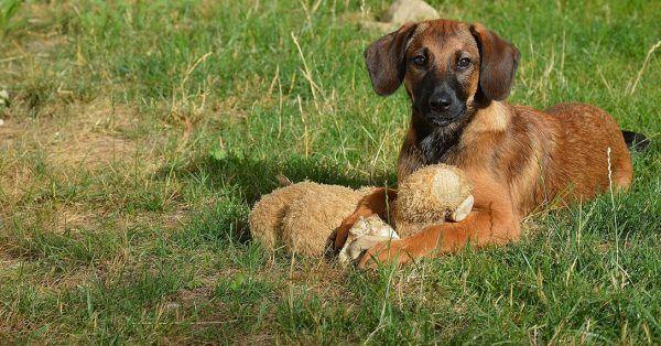 hond-en-knuffel