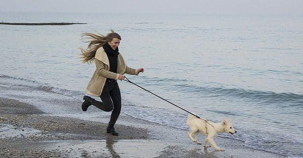 honden-trainingsartikelen-hardlopen