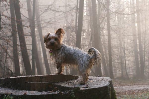 hondenmedicijnen