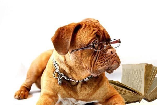 kantoorartikelen hond