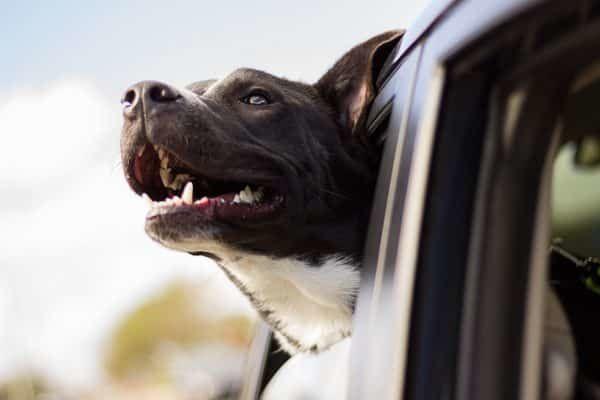 onderweg met je hond