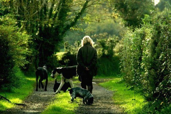 op pad met de honden