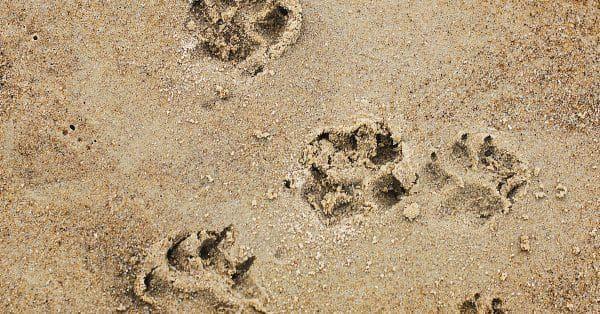 vermissing hond