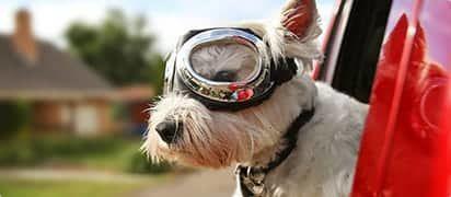 hondenverzekering-eigen-risico