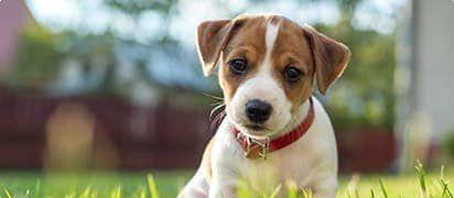 hondenverzekering-leeftijd