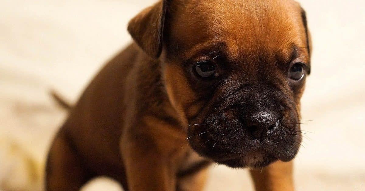 puppy naam