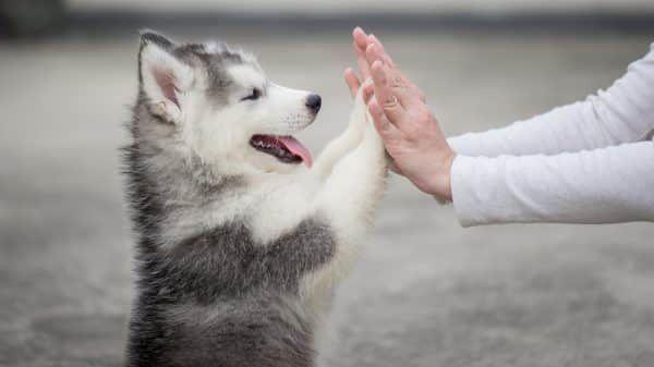 puppy-leren-kennen