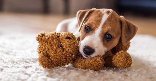 12-redenen-om-een-online-puppycursus-te-volgen