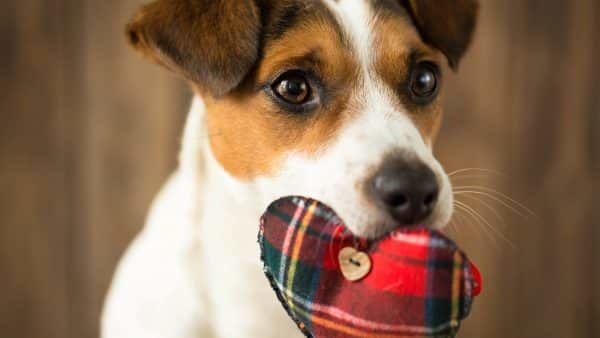Thuiskomst met je puppy