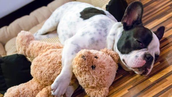 de_eerste_nacht_puppy