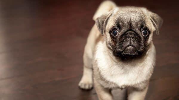de_eerste_ochtend_puppy