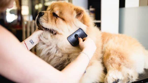 borstelen puppy
