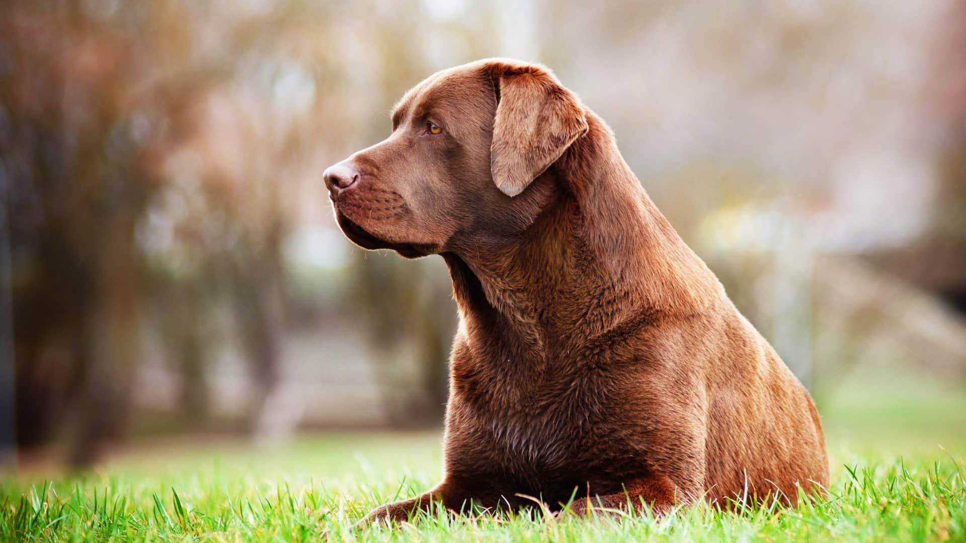 Zorgen voor een oudere hond
