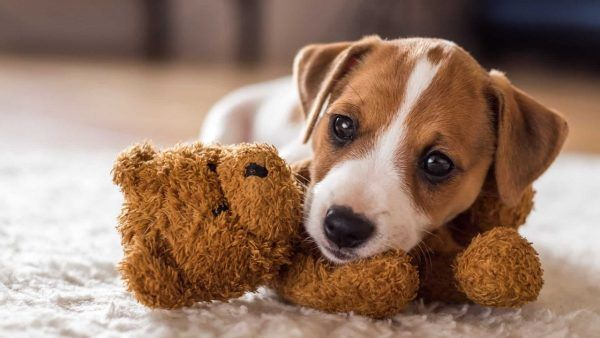 hond-plaats-leren-puppy