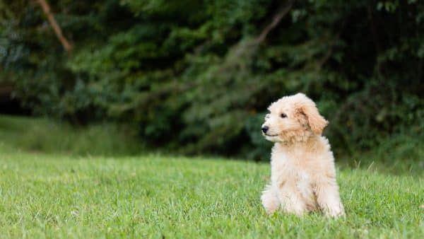 opvoeden puppy