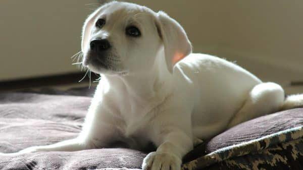puppy opvoeden