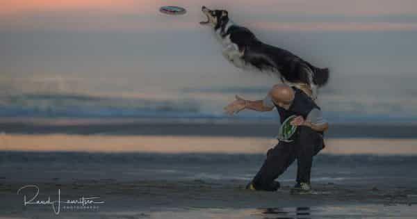 honden fotograaf