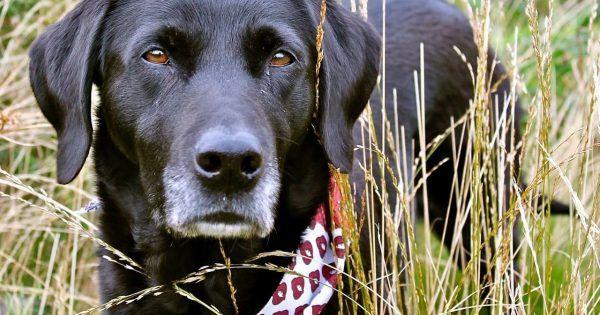 grasaren hond